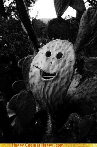 Objects With Faces - Cactus Laughs At Your Attempt To Pet It