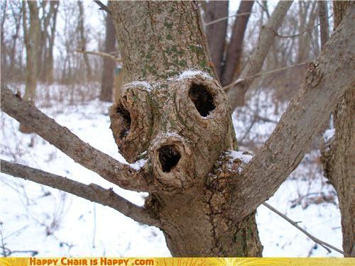 Objects With Faces - Ooooo, I'm A Scary Tree