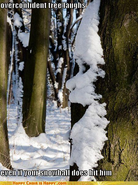 objects with faces-overconfident tree laughs  even if your snowball does hit him