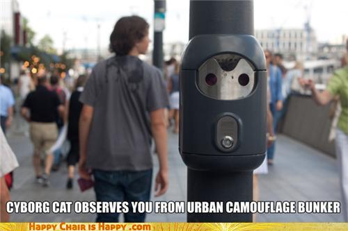 Objects With Faces-CYBORG CAT OBSERVES YOU FROM URBAN CAMOUFLAGE BUNKER