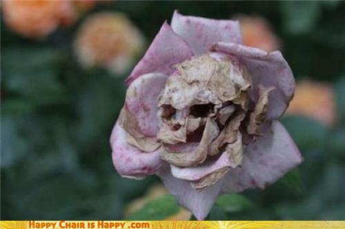 objects with faces-Skeleton Rose Feels Dead Inside and Out